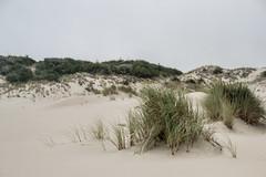 dunescape (vynsane) Tags: oregon sanddunes pacificcoast oregondunesnationalrecreationarea florenceor findyourpark