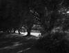 2014_August_Nerkoon-kanava_Graflex_Heliar_007 (Tatu Korhonen) Tags: 4x5 15cm graflexcrowngraphicvoigtländerheliar
