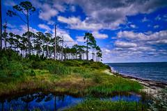 Clouds Over Naval Live Oaks (Stuart Schaefer Photography) Tags: trees sky seascape clouds landscape florida parks gulfbreeze navalliveoaks