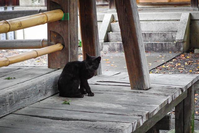 Today's Cat@2014-09-04