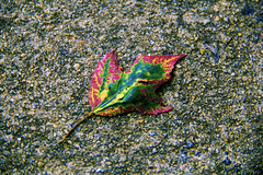 Earth Gem (Ice|Rain) Tags: life blue autumn light red green fall nature colors beautiful leaves yellow leaf rocks colorful flat bright earth decay cement cycle colored fractals value gem gravel brilliance ridges evolve contours edges