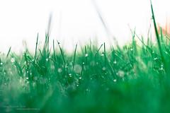 A lazy morning (Daniel Kulinski) Tags: autumn water photography drops warm europe day image bokeh daniel creative picture samsung poland warsaw 60mm 1977 photograhy ossa nx kulinski nx20 samsungnx samsungimaging łódźvoivodeship danielkulinski samsungnx60mmf28 samsungnx20