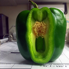 Orton Pepper (Roger Rua) Tags: green pepper seeds greenpepper orton appleiphone5s