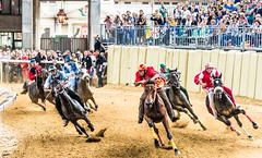 Palio di Asti 3 (Franco Beccari) Tags: world city trip travel blue red vacation horses italy white holiday black color colour green tourism nature yellow photography nikon europe piemonte tradition nikkor piedmont palio horserace asti d600 paliodiasti