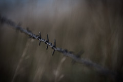 DSC_1846 (Holt MeCloser) Tags: barbed wire nature outside vignette
