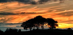 Sunset (PeskyMesky) Tags: sunset aeroplane tree sunrise aberdeen aberdeenshire scotland silhouette redsky flickr canon canoneos500d