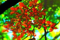Autumn (Maurizio Scotsman De Vita) Tags: vegetation foglie landscape nature plantsflowers controluce panorama vegetazione leaves backlit vegetables silhouette paesaggio vegetali natura piante italia mixedmedia sanmicheleincamposcuro benevento campania