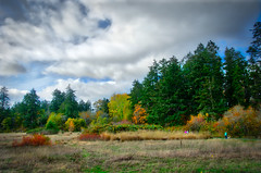 'A Walk in the Park' (johnscratchley) Tags: hdr landscape parks nature scenery vancouverisland canada