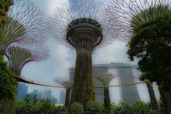 On higher Ground (*Capture the Moment*) Tags: 2015 bäume landschaften marinabaysands palmen palms sg50 singapore singapur trees
