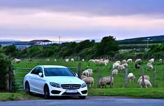 posh.... (doods-Internet so slow :-o) Tags: car farm ountry ewe sheep sky cloudy