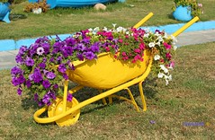 Garden Decor, Flower pots in an old buggy (George @) Tags: pots art garden décor διακόσμηση ντεκόρ καρότσι κήποσ buggy flowers flower λουλούδια άνθη colours colorful yellow κίτρινο blossom planter εικόνεσ travel green metal works diy idea george papaki eyes greek greece ελλάδα photography visitgreece greekphotographers naturephotography ©georgeeyes macedoniagreece makedonia timeless macedonian μακεδονια