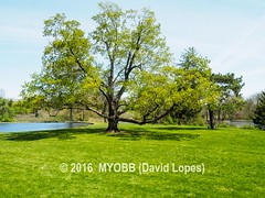 Duke Farms-4212107-2 (myobb (David Lopes)) Tags: dukefarms hillsborough nj newjersey nature olympus em1 omd