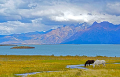 Viedma Lake - Patagonia (orlanangel) Tags: mountain forest paisagem natureza montanha floresta landscape nature outdoor sky argentina america south patagonia horses lake lago viedma ao ar livre serenidade viagem amazing viagens paradise cavalos horse nationalpark panorama nuvens nuvem cloud clouds cu trip beauty beautiful photography