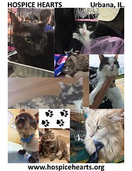 National Cat Day 10/29/16 (Hospice Hearts) Tags: hospicehearts urbana champaign illinois il wwwhospiceheartsorg animalrescue nonprofit cat cats foster feline felines foreverhome adopt volunteer nationalcatday 102916 saturday october292016 boss casper chloe cleo clive cucumber fancy gilligan jonah kava kouschka midnight poppycat salem scooter snickers1 snickers2 sissy guillermo starr tiny trina victor adoptdontshop