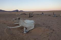 DSC06728 (cle1759) Tags: saharra morroco travel paisaje