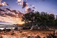 Town beach mangrove (Richard Mart1n) Tags: poem poetry landscape landscapes broome western australia travel ocean sky clouds nikon d5000