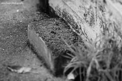 Lincolnshire garden brick (SteveH1972) Tags: brick black white blackandwhite monochrome bw garden northernengland canon70200lf28usmnonis canon70200 canonef70200f28lusm canon 70200 outside outdoor outdoors stilllife uk scunthorpe northlincolnshire scunny