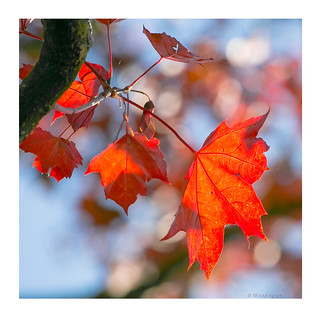 Ephemeral autumnal hues