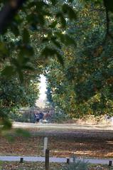 St Pauls not quite visible (jiving John) Tags: wisy walk riverthames richmond barnes