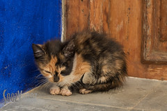 Timid (Sue_Hutton) Tags: asilah maroc morocco november2016 autumn cat depressed frightened kitten northernmorocco timid