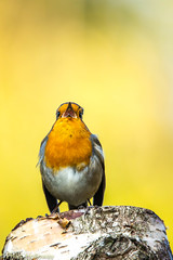 5D4_2869.jpg (photo.freestyle) Tags: johnstantonphotographycouk birds hide animals midsussexdistrict england unitedkingdom gb