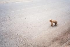 Stray Terrier (Taomeister) Tags: fujicolorindustrial100 gyoumuyou ricohgr1v 業務用100 fujifilmindustrialarchivalprint100 2828