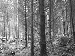 The Atmosphere (Lo766) Tags: winter fotosondag sweden iphone6plus mystik photosunday smland lo766 bw natur fs161204 woods trees