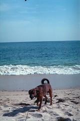 Praia do Coelho, Arrbida, Outubro 2014 (Tefilo de Sales) Tags: arrabida praia do coelho beach sea atlantic lisbon sado hidden natural park sand ocen film fuji fujifilm fujixtra400 analog analogic nikkormatel nikkormat nikon nikkor 50mm 35mm expired dog