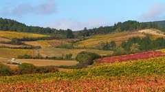 Vineyards, Chateau de Serres (Niall Corbet) Tags: france occitanie roussillon languedoc aude vineyard chateaudeserres serres vine vignoble autumn yellow red