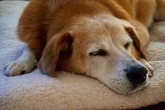 Dustin (cisc1970) Tags: sony sonya6300 brooklyn nyc badassbk dog dustin