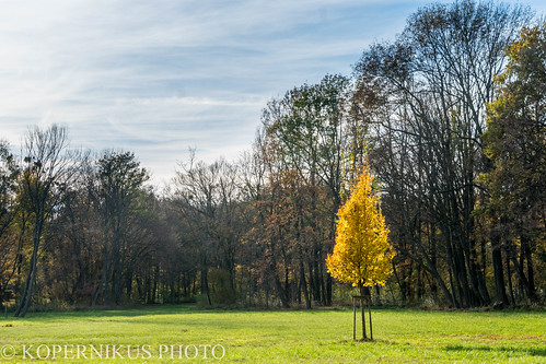 Autumn in Laxenburg