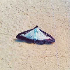 2014, Butterfly (carcioneelena) Tags: butterfly colours nuances home vsco