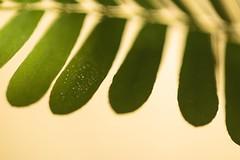 Perles (daubiwan) Tags: ifttt 500px macro photo nature green verte plante plant grass herbe 100mm canon 70d