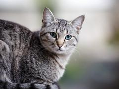 Street cat 174 (Yalitas) Tags: cat cats    kedi chat feline kat katze katzen kot kotka pet felino kottur katte kass kitty gato kocka gatta katzchen streetcat canon youngcat