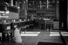 DSCF3078 (Thorsten Burkard) Tags: bar lonely hearts dog heart einsam littledoglaughednoiret