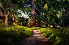 Just a hop, skip & a jump (Kevin_Jeffries) Tags: pathway path flickrtoday flickr nature tree kevinjeffries landscape new december green light art summer nikon d7100 nikkor