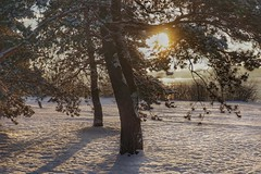 Morning sunshine by the river (beyondhue) Tags: snow winter landscape tree beyondhue ottawa river gatineau sun rays morning light