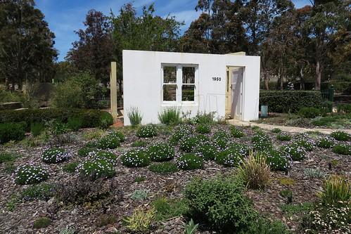 Blossom at Cranbourne Australian Garden 2016  28