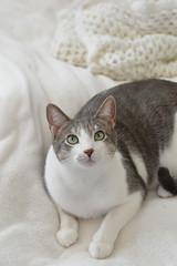 DSC_0058 (kaymann+l+woo) Tags: catsofinstagram cats cute