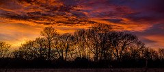 Sunset thames field Wraysbury_001 (Anthony Britton) Tags: canon5dmk3 2470canonllens thamesfield wraysburyberkshire sunsets winter