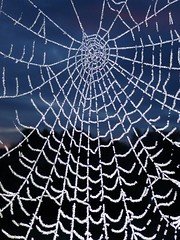 Frosty Web..x (Lisa@Lethen) Tags: frost web morning nature weather
