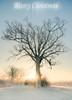 x<3x (Jonathan Casey) Tags: merry christmas merrychristmas xmas card sunrise frost snow winter wymondham norfolk d800 zeiss 21mm f28 distagont2821 nikon