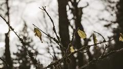 Winter_13 (losing.today) Tags: nature oregon outdoors pacificnorthwest portland pdx portlandor portlandoregon cold coldseason winter