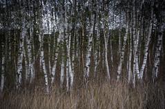 Forest 3 (hansekiki ) Tags: canon multipleexposure bremen landschaften blockland mehrfachbelichtung 5dmarkiii