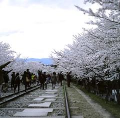 94710006 (Darjeeling_Days) Tags: hasselblad 京都 中判 プロビア