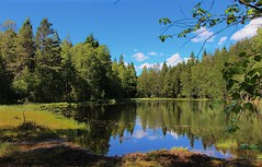 Forest Pond 2 (bjorbrei) Tags: trees lake water oslo norway forest reflections pond tarn nordmarka