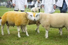 Kent_County_Show_2014_008