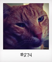 "#DailyPolaroid of 29-6-14 #274 • <a style=""font-size:0.8em;"" href=""http://www.flickr.com/photos/47939785@N05/14496322457/"" target=""_blank"">View on Flickr</a>"