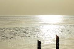 Liquid Silver Laguna Madre