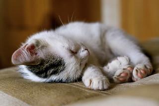 L'heure de la sieste